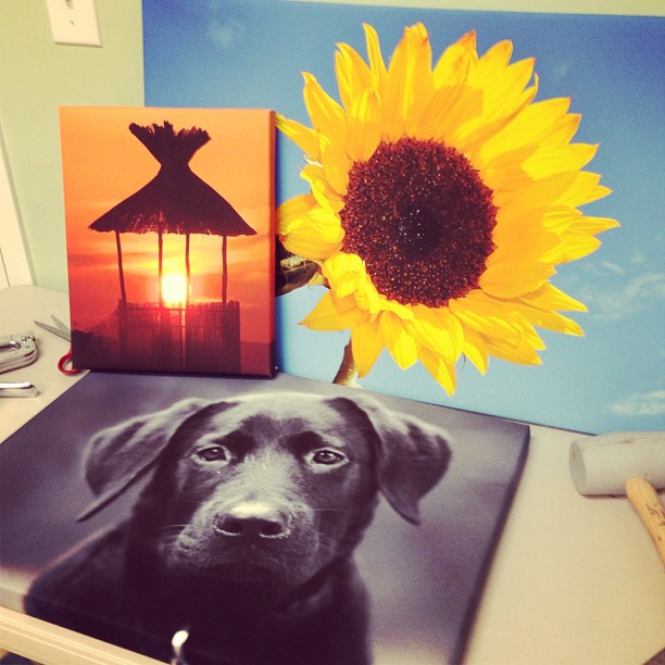 3 canvas prints including one with pet